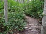 Logs of Log Jam