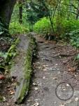 Technical Trail